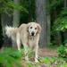 leuke-achtergrond-met-een-hond-in-het-bos