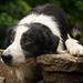 mooie-achtergrond-met-een-hond-hd-honden-wallpaper-foto