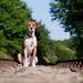 wallpaper-met-een-hond-op-de-rails-hd-honden-achtergrond