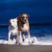 wallpaper-van-twee-honden-in-de-branding-van-de-zee