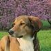 dog-2203204_960_720