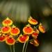 flowers-2209558_960_720