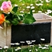 roses-2230528_960_720
