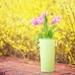 spring-flowers-2222879_960_720