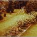 opa in de tuin