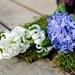 hyacinth-2119049_960_720