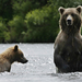 Alaska_Ber