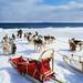Alaskan_Klee_Kai_and_Alaskan_Malamute