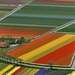 Holland_flower_fields