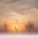 foto-prachtig-winterlandschap-met-sneeuw-bomen-zon-en-mist-hd-win