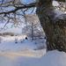 foto-van-een-winter-landschap-met-een-dikke-boom