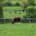 hd-achtergrond-met-een-foto-van-een-bruin-paard-in-het-weiland