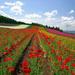 hd-bloemen-wallpaper-met-een-veld-vol-verschillende-kleuren-bloem