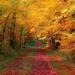 hd-herfst-achtergrond-met-een-pad-tussen-de-bomen-door-met-veel-r