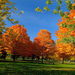 hd-herfst-achtergrond-met-herfst-in-het-park-hd-herfst-wallpaper