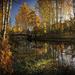 hd-herfst-landschap-achtergrond-met-veel-bomen-en-veel-vallende-b