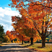 hd-herfst-wallpaper-met-bomen-met-herfstbladeren-achtergrond-herf
