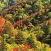 hd-herfst-wallpaper-met-een-bos-en-bomen-met-herfstbladeren-achte