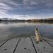hd-honden-achtergrond-met-hond-kijkt-uit-over-bevroren-meer-hd-wi