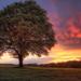 hd-landschap-achtergrond-met-een-grote-boom-en-ondergaande-zon-hd