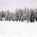 hd-sneeuw-wallpaper-met-een-bos-en-veel-sneeuw-achtergrond-foto