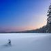 hd-winter-achtergrond-aan-de-rand-van-een-bos-in-finland-hd-sneeu