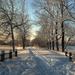 hd-winter-achtergrond-met-een-besneeuwde-weg-hd-wallpaper