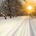 hd-winter-achtergrond-met-een-weg-bedekt-met-sneeuw-en-bomen-snee