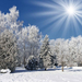 hd-winter-wallpaper-met-bomen-en-sneeuw-hd-winter-foto