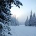 hd-winter-wallpaper-met-sneeuw-en-bomen-hd-winter-achtergrond