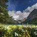 landschap-achtergrond-met-bloemen-bergen-en-een-meer