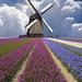 hollands-landschap-met-een-molen-en-een-veld-vol-bloemen-hd-molen