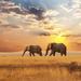 landschap-met-twee-olifanten-en-een-ondergaande-zon-hd-olifanten-