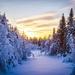 pad-tussen-de-bomen-door-bedekt-met-dikke-laag-sneeuw-hd-winter-b