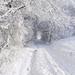 prachtige-winterlandschap-wallpaper-met-bomen-bedekt-met-sneeuw