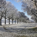 winter-achtergrond-met-bomen-en-een-dun-laagje-sneeuw