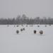 winter-landschap-met-schapen-en-een-weiland-bedekt-met-een-laag-s