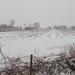 winter-wallpaper-van-een-maisveld-bedekt-met-een-laag-sneeuw