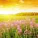 zomer-wallpaper-ondergaande-zon-bloemen-gras-foto-ondergaande-zon
