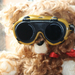 Teddy-bear_funny_desktop_wallpaper