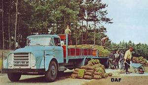 DAF-A16