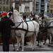 Roeselare-Sinterklaas-18-11-2017-3