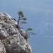 cliff-2475686_960_720