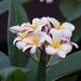 flower-2530255_960_720
