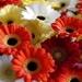flowers-2665444_960_720