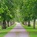 old-linden-alley-2435494_960_720