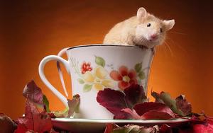 dieren-tamme-rat-wallpaper-een-rat-in-een-kop-thee-hd-achtergrond