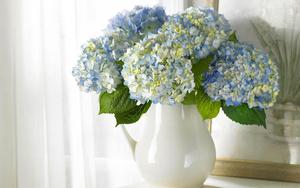 hd-bloemen-wallpaper-met-een-blauwe-hortensia-in-een-vaas-bloemen