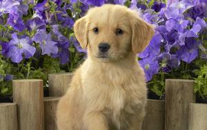 hd-honden-wallpaper-met-een-schattige-lieve-hond-en-paarse-bloeme