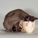 hd-katten-wallpaper-met-een-kat-die-melk-drinkt-uit-een-mok-achte